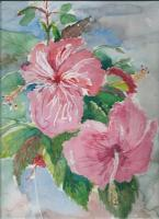 Floral Watercolour - Hibiscus Blooming - Water Colour
