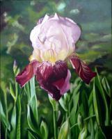 Floral - Red Deep Iris - Oil On Canvas