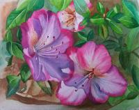 Floral - Pink Deep Azaleas - Watercolor