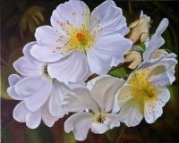 Floral - Cherokee Rose - Oil On Canvas