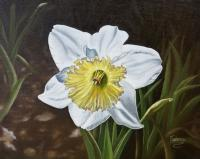 Floral - White Daffodil With Yellow Center - Oil On Canvas