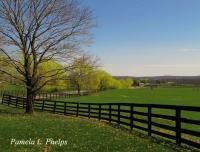 Rustic Countryside - Springtime At The Farm - Digital Photography