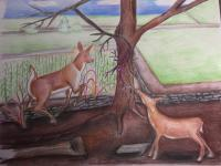Colored Pencil - Afternoon In The Country - Colored Pencil
