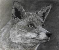 Fox2 - Mixed Drawings - By Wendy Jones, Realism Drawing Artist