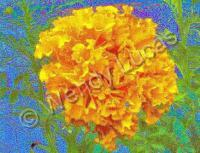Crazy Carnations - Photography Digital - By Wendy Lucas, Impressionist Digital Artist