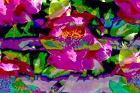 Petals - Photography Photography - By Keith Bond, Abstract Photography Artist
