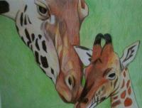Hannahs Giraffes - Colored Pencil Drawings - By Carl Parker, Realist Drawing Artist