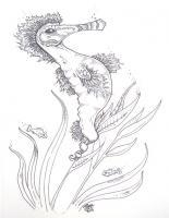 Seahorses - Seahorse - August - Pen And Ink