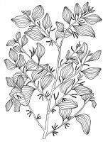 Mistletoe Tree - Exocarpus Latifolius - Pen And Ink Drawings - By William Ivinson, Black And White Line Art Drawing Artist