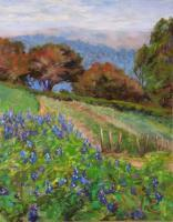 Landscapes - Larkspur Pajaro Valley - Pastel