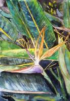 Bird Of Paradise - Water Color Paintings - By Derek Mccrea, Impressionism Painting Artist