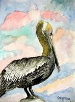 Pelican 2 - Watercolor Paintings - By Derek Mccrea, Realism Painting Artist
