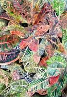 Croton Plant - Watercolor Paintings - By Derek Mccrea, Realism Painting Artist