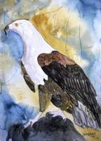 Eagle - Water Color Paintings - By Derek Mccrea, Realism Painting Artist