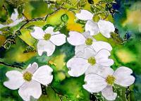 Art Of Derek Mccrea - Dogwood Tree Flowers - Water Color