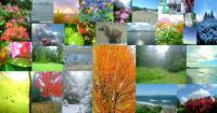 Photography - Photo Collage - Digital Photography