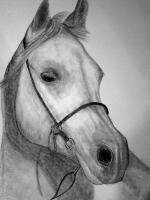 Horse Drawings - Sonny - Pencil