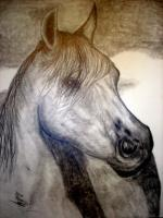 Horse Drawings - Wisper In The Wind - Pencil