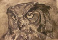 Owl Portrait - Charcoal Pencil On Paper Drawings - By Sean King, Portraits Drawing Artist