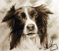 Dog Study - Charcoal Pencil On Paper Drawings - By Sean King, Portraits Drawing Artist