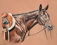Equine - Bay Hunter - Colored Pencil