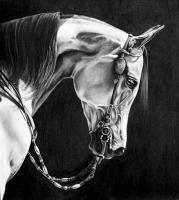 Equine - Pennycandy - Graphite