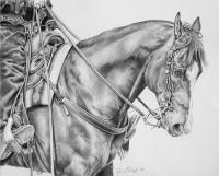 Equine - Backup - Graphite