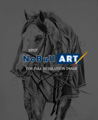 Equine - Back To The Barn - Graphite