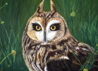 Animal - Horned Owl - Acrylic