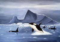 Animal - Orcas And Ice - Acrylic
