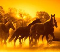 Horses - Horses At Sunrise - Digital