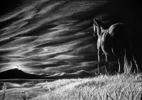 The Lookout - Charcoal Drawings - By Risa Kent, Equine Drawing Artist
