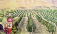 Illustration - Gallo Wine Theme Color Pencil Drawing - Color Pencils