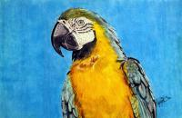 Squawk - Marker Mixed Media - By Allen Palmer, Realism Mixed Media Artist