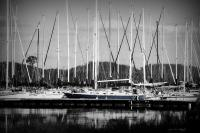 Amys Cusotm Black And White Ph - Sailing  In Blue - Digital