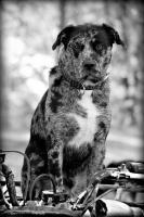 Mans Best Friend - Digital Photography - By Amy Mcmullen, Fine Art Photography Photography Artist