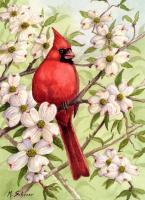 Wildlife - Cardinal In Dogwood - Watercolor