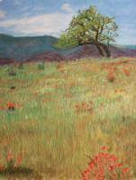 Landscapes - California Poppies - Pastel