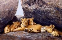 Wildlife And Nature Art - Mom And Cubs - Oil On Canvas