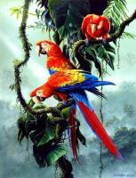 Wildlife And Nature Art - Macaw Parrot - Acrylics