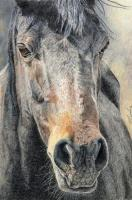 Wildlife And Nature Art - Wild Horse - Water Color Pastel Pencils