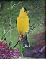 American Goldfinch - Acrylic On Board Paintings - By Deborah Boak, Realism Painting Artist