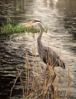 Birds - Gone Fishing - Acrylic On Canvas