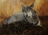 Animals - Lone Wolf - Acrylic On Board
