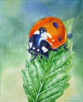 Ladybug - Watercolor Paintings - By Artist Irina Sztukowski, Realism Painting Artist