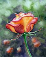 Morning Rose - Watercolor Paintings - By Artist Irina Sztukowski, Realism Painting Artist