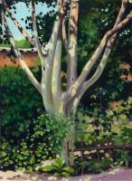 Pear Tree - Oil On Cardboard 247 X 339 Mm Paintings - By Yurii Makovetsky, Realism Painting Artist