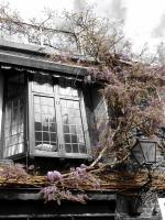 Wisteria - Photography -- Digitally Edite Digital - By Alexis Hejna, Select Color Digital Artist