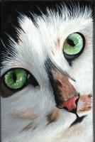 Funny Face - Acrylic Paintings - By Diane Deason, Realistic Painting Artist