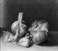 Garlic - Ink On Paper Drawings - By Yury Kushevsky, Classical Realizm Drawing Artist